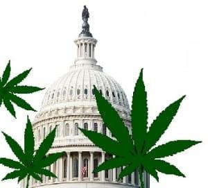 DC-Marijuana2