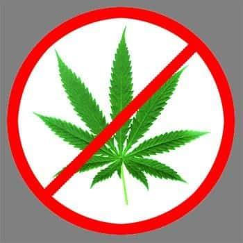 3432288842_marijuana_ordinance_answer_2_xlarge