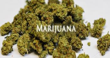 learn-about-marijuana31