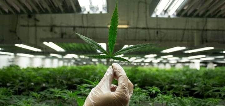 Marijuana Industry Predictions for 2017