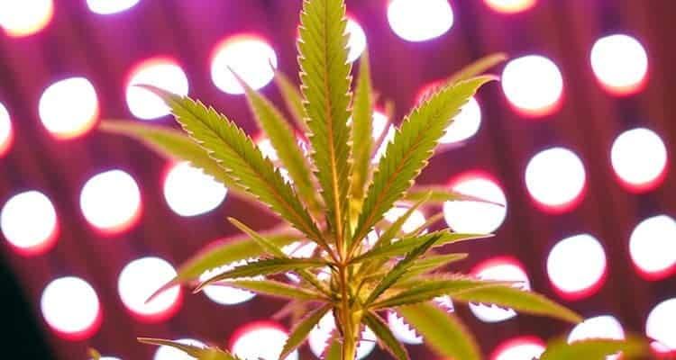 Washington's Recreational Marijuana Market Will Reach $2.4B by 2020
