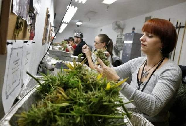The Growing List of Marijuana Industry Jobs and Businesses