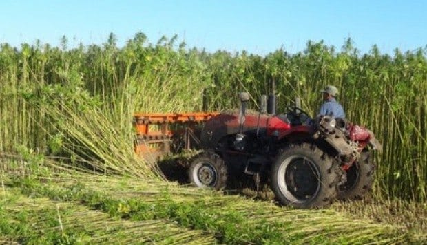 China's Hemp Production is Enormous