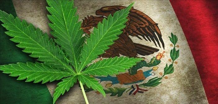 Mexico Casually One-Ups U.S. By Legalizing Medicinal Marijuana