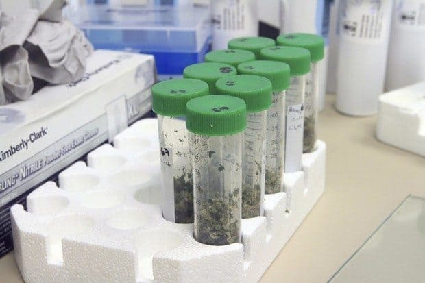 Ohio Medical Marijuana Begins at Hocking College