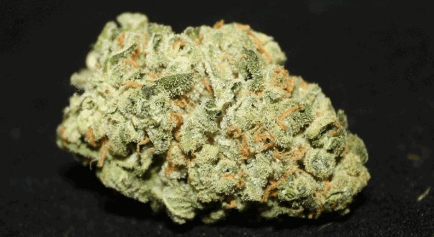 weed-reviews-spirit