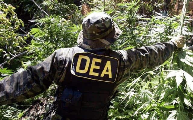 California Marijuana Raids Involve Chinese Immigrants