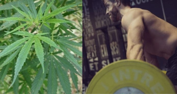 Lifting Weights and Marijuana: The Science Behind The Two