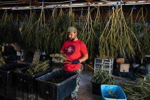 High Marijuana Taxes Pose Problems In California