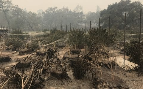 The Federal Government is Preventing California Wildfire Donations Getting to Victims Cannabis Farm Victims in California, one of the Recreational Weed States Get No Help for Recreational Marijuana or Medical Marijuana