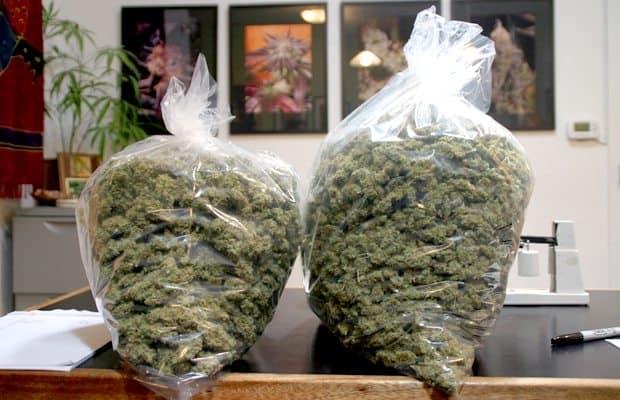 How Does Harborside Health Center Process So Much Marijuana?