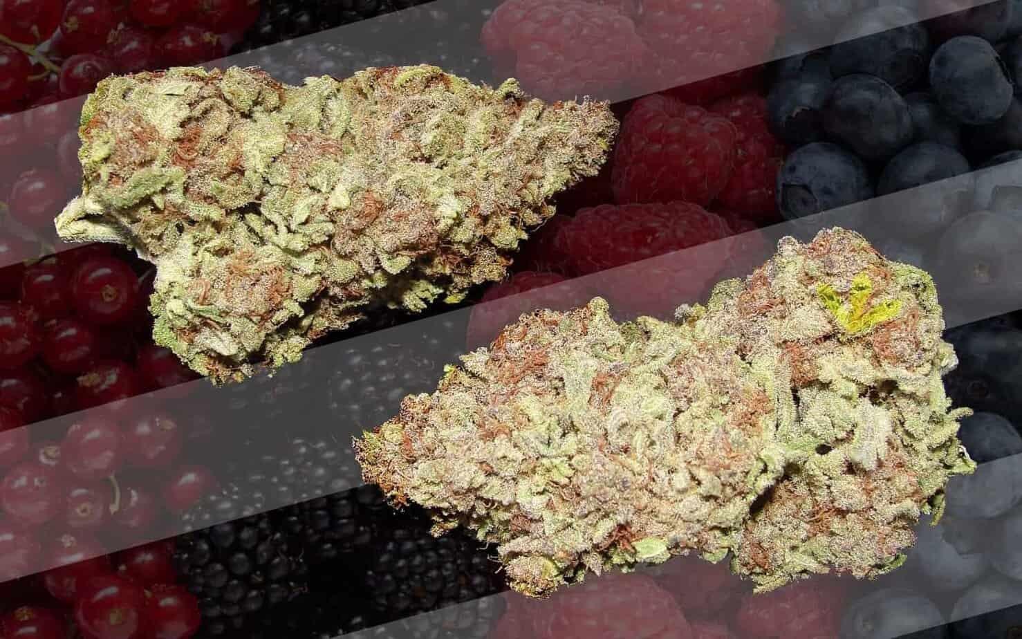 420 Marijuana Reviews: Berry White