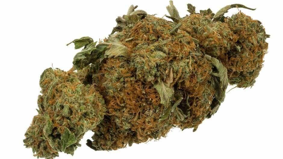 420 Marijuana Reviews: The Euforia Strain