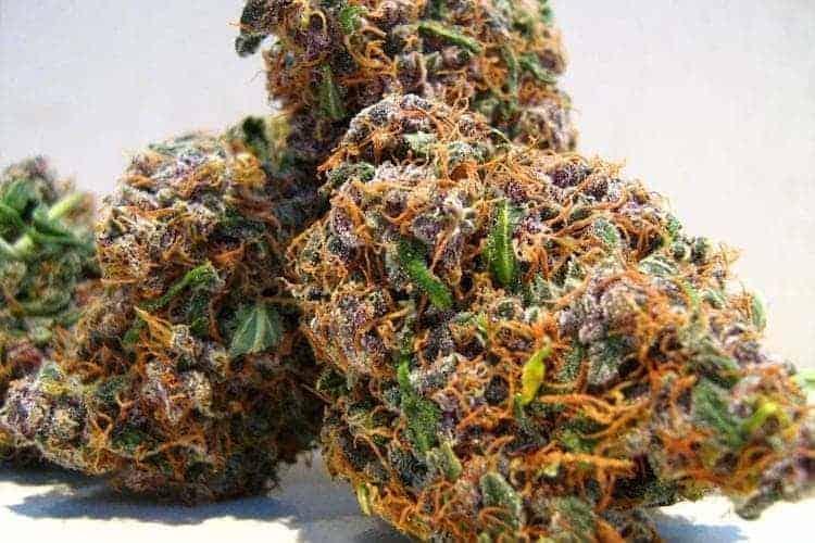 420 Marijuana Reviews: Fruity Pebbles