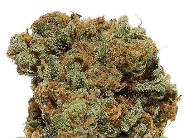 420 Marijuana Reviews: Alice in Wonderland