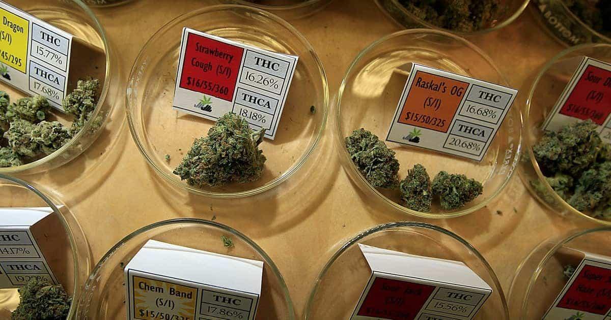 How To Choose Your Marijuana, weed news