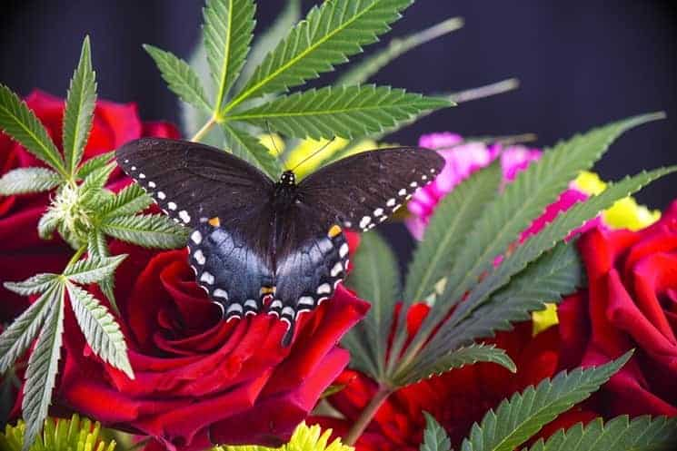 Marijuana-Related Gift Ideas For Mother's Day, cannabis news
