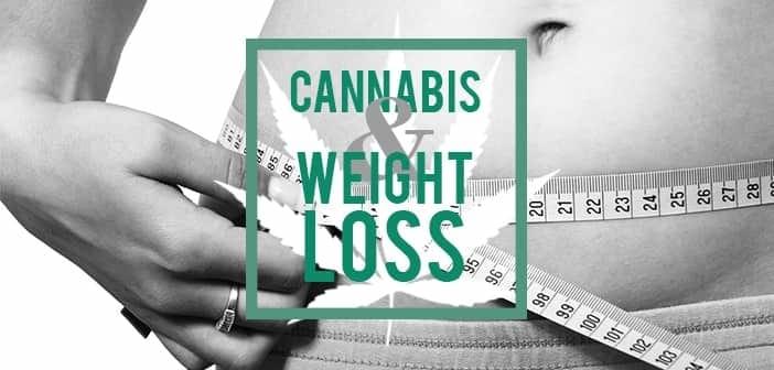 How Cannabinoids May Help You Lose Weight, marijuana news