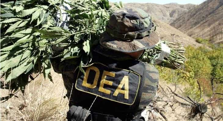 The DEA's New Slang For Weed, marijuana news