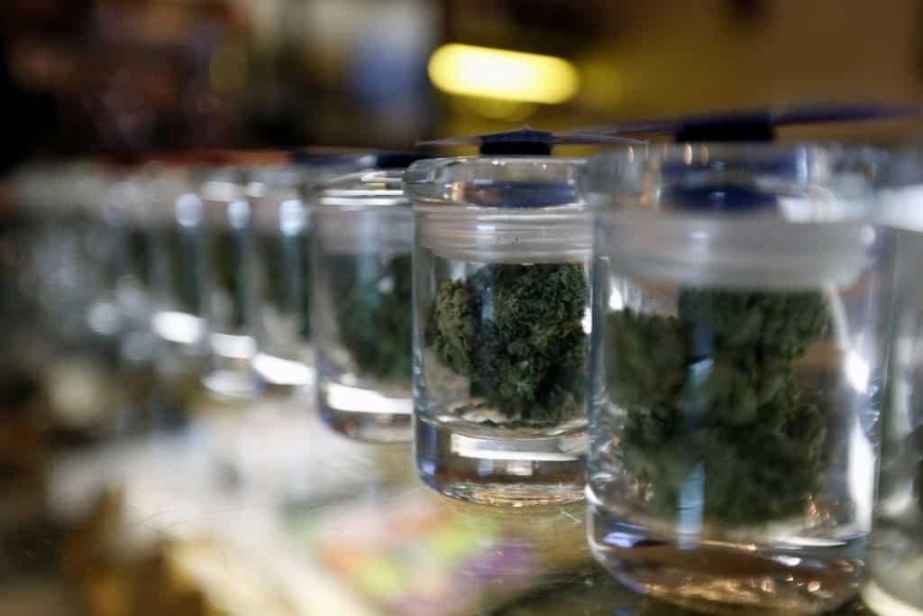 Five Starter Cannabis Strains, marijuana news, weed smokers