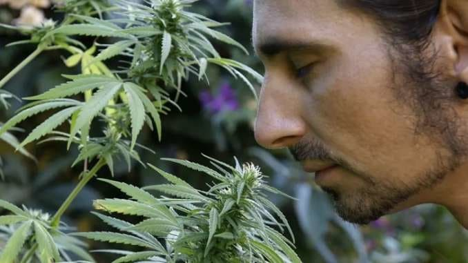 Ways To Hide That Weed Smell, when will marijuana be legal everywhere, marijuana legalization