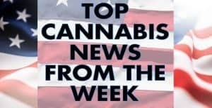 TNMNews Live Broadcast: August 24th, 2018 Cannabis News Week in Review, trending marijuana news, sb 930, k2, avma