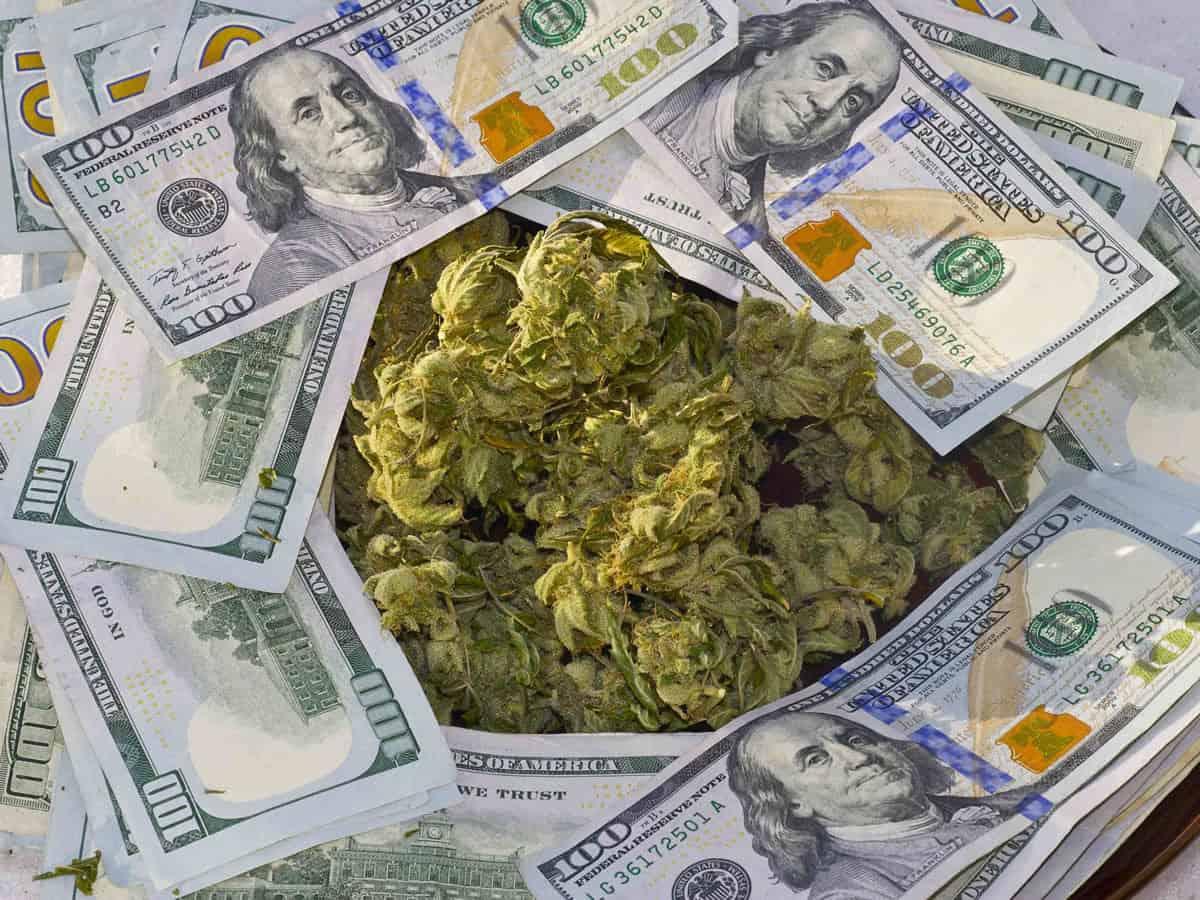Marijuana Industry Jobs By Pay, trending marijuana news