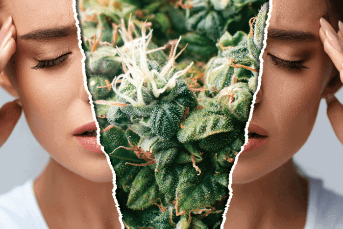 The Best Cannabis Strains For Headaches, cannabis news, migraines and marijuana, cannabis community