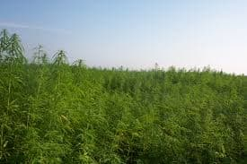 hemp futures, Hemp Farming Act, Farm Bill, industrial hemp, CBD, hemp farming, hemp farmers, cannabis news
