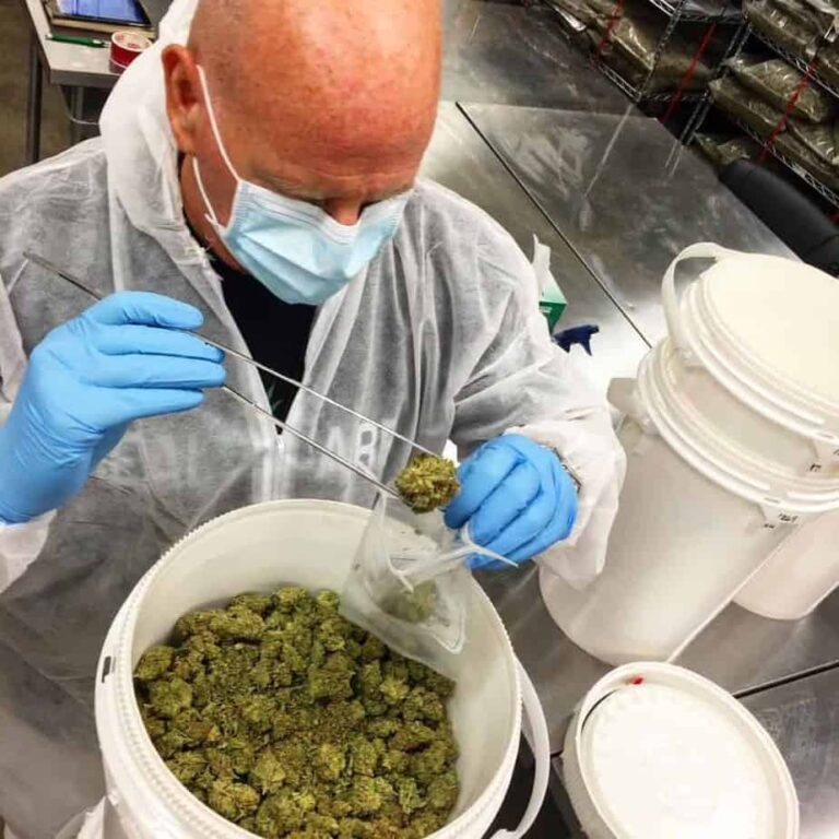 A man working in the cannabis industry