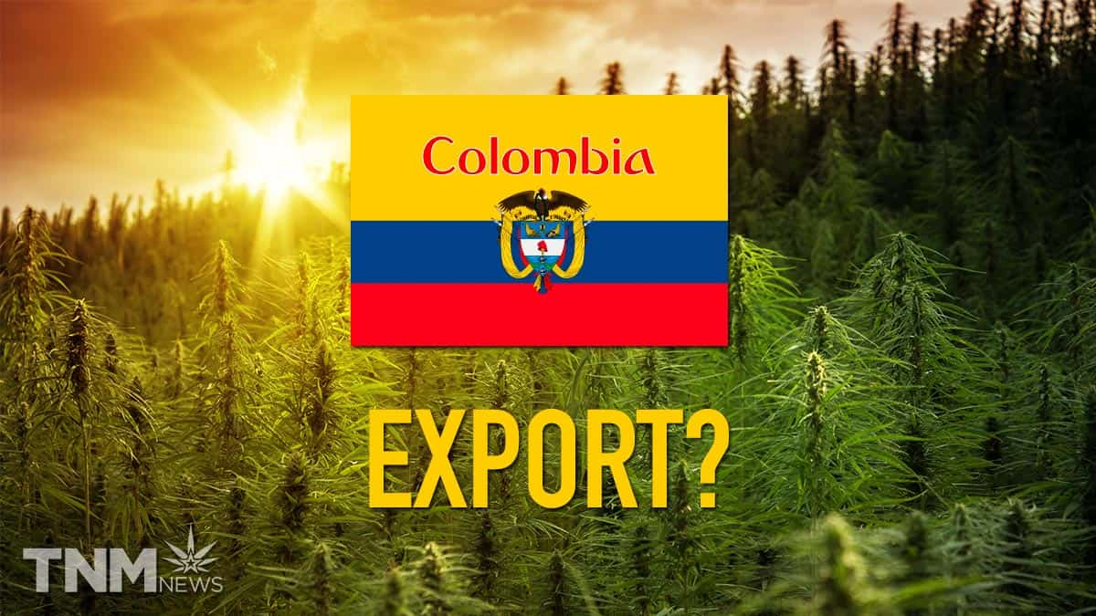 COLOMBIAN FLAG IN CANNABIS FIELD